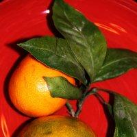 Мандарин-витамин ... :: Лариса Корженевская