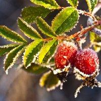 Первый день зимы :: Татьяна Панчешная