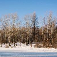 зимний лес :: Сергей Сол