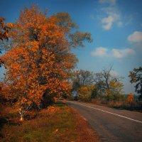 Пылающая листва :: Егор Плетенец