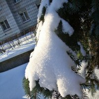 Снег :: Лидия (naum.lidiya)