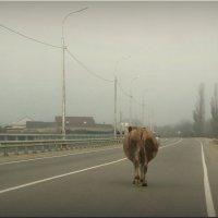 Ситуация! :: Владимир Шошин