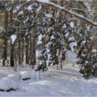 Зимний лес :: Дмитрий Конев