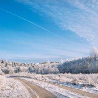 Звенящей тишиною Сверкал сегодня зимний лес.... :: Анатолий Клепешнёв