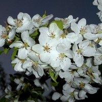 Была весна-цвели сады. :: nadyasilyuk Вознюк