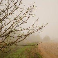 туман :: Иван Горошек