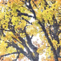 Осень :: Александр Кривушин