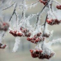 Морозное дыхание зимы :: Ната Волга