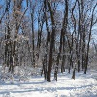 По зимнему парку... :: Тамара (st.tamara)