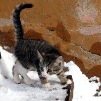 На прогулку :: Роман Маркин