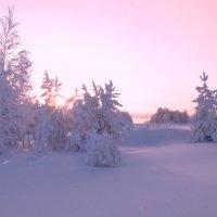 Зимнее утро. :: Алексей Хаустов