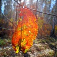 Последнии краски осени :: оксана