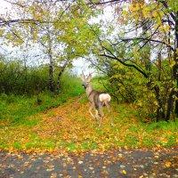А листья падают, падают.... :: Геннадий Ячменев