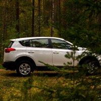 Rav4 в лесу :: Александр Фролов