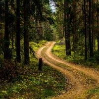 Дорога в лесу :: Александр Фролов