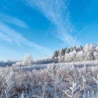 Лесную полянку мороз заковал... :: Анатолий Клепешнёв