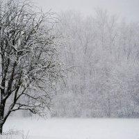 Снегопад :: Екатерина Бурлуцкая