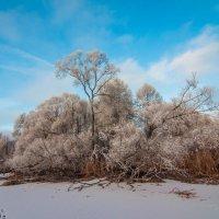 на берегу замёрзшего пруда :: Алексей Кошелев