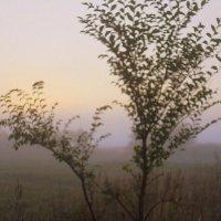 Туман :: лидия Кашицина
