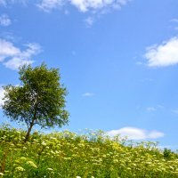 лето.деревце.трава :: Урусов Ренат