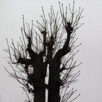 Зимнее дерево :: super-krokus.tur ( Наталья )