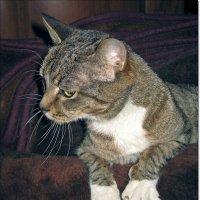 Если и есть в кошках какая-то тайна, то только одна: почему они решились стать домашними животными :: muh5257