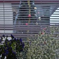 Новый год уж у окна :: Svetlana27