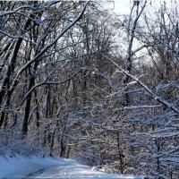 Дорога через зиму... :: Тамара (st.tamara)