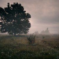 Morning mystical IV... :: Roman Lunin