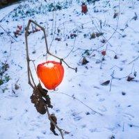 Зимний фонарик :: Александра Гай