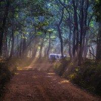 Дорога в джунглях :: Владимир Орлов
