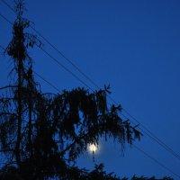 Сны фонарей обернулись явью :: Ирина Данилова