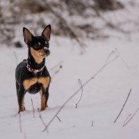 Первый снег :: Александр Шарапов