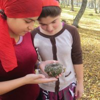 Гнездо нашли. :: Анжела Шагбанова