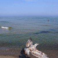Пейзаж с чайкой :: Клара Кузнецова
