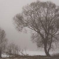 Туман в декабре :: Екатерина Бурлуцкая
