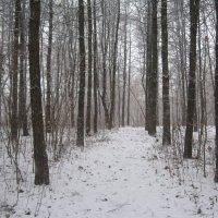 Зима,однако.. :: Джулия К.