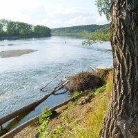 Река Томь :: Евгения Каравашкина
