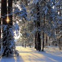 Невесомы солнечные тени... :: Лесо-Вед (Баранов)