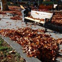 Осенний беспорядок :: Наталья Джикидзе (Берёзина)