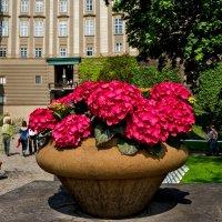 Цветочек в горшочке :: Ольга Маркова