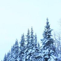 Зимний лес :: Ananasik XI