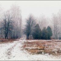 Жемчужные сети тумана укутали сказочный лес.... :: Svetlana Kravchenko