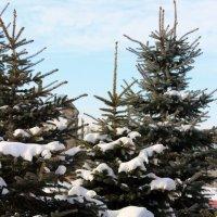 Вот и зима :: Светлана SvetNika17