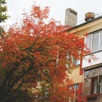 Осень :: Billie Fox