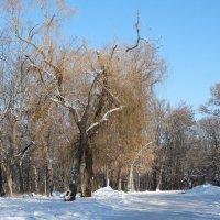 Зимний парк... :: Тамара (st.tamara)