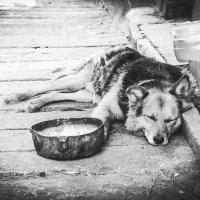 Пёс :: Владимир Грин
