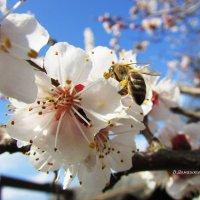 Весна... :: Валентина Домашкина