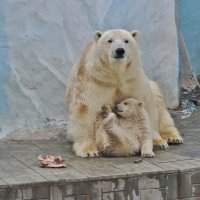 С мамой :: Аркадий