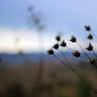 Осень :: Елена Козлова